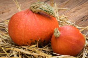 red-kuri-pumpkin-squash-plants